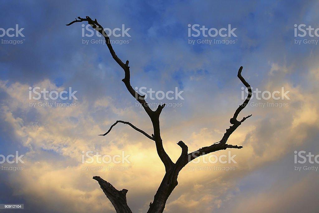 Sunset Tree royalty-free stock photo