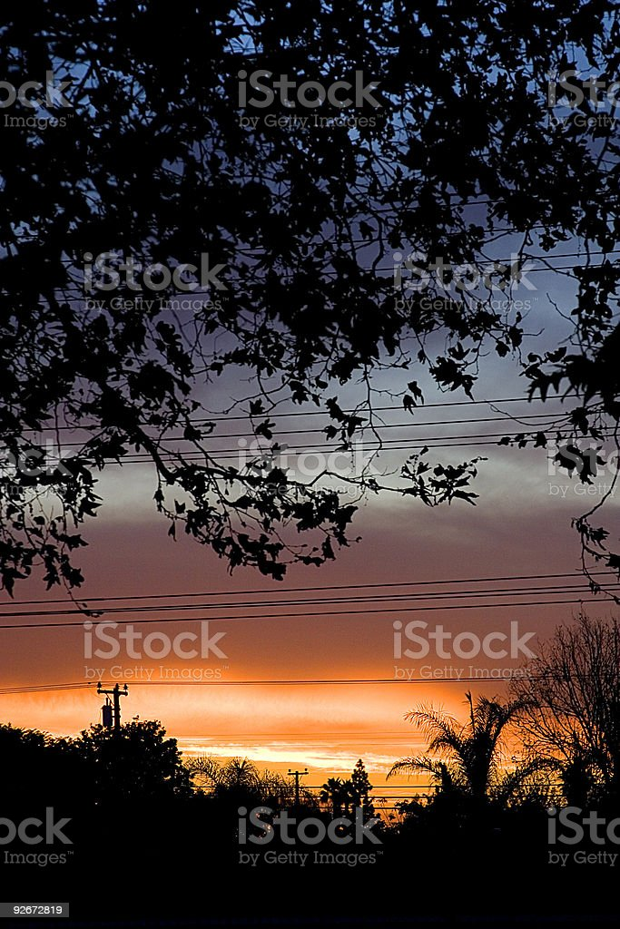 sunset tree silhouette royalty-free stock photo