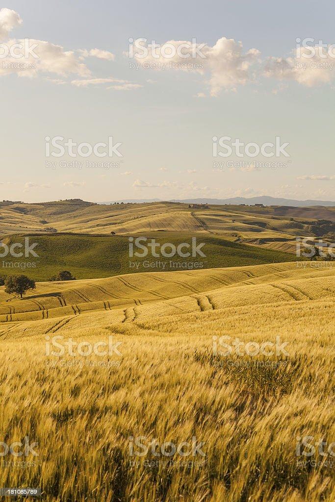 Sunset Tuscany landscape stock photo