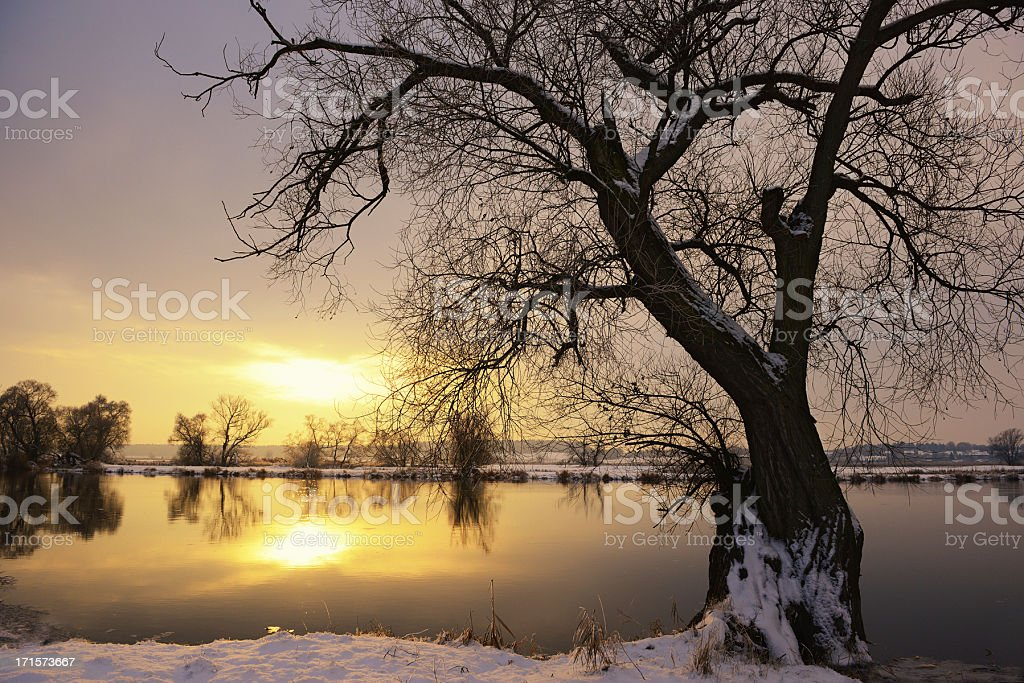 Sunset winter landscape with Willow tree stock photo