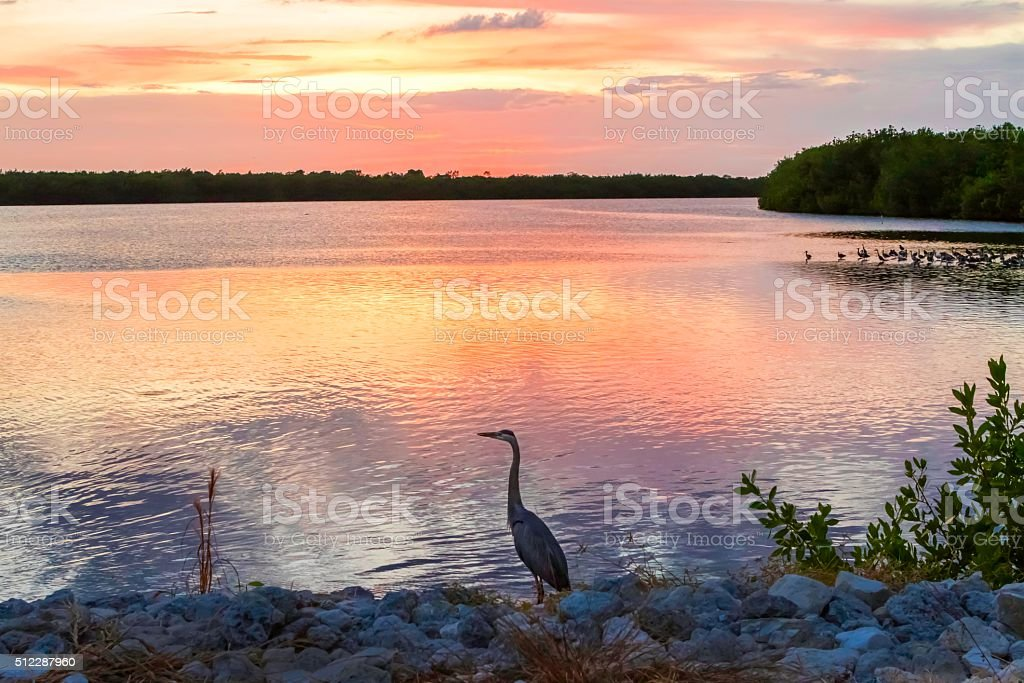 Sunset with a Great Blue Heron stock photo