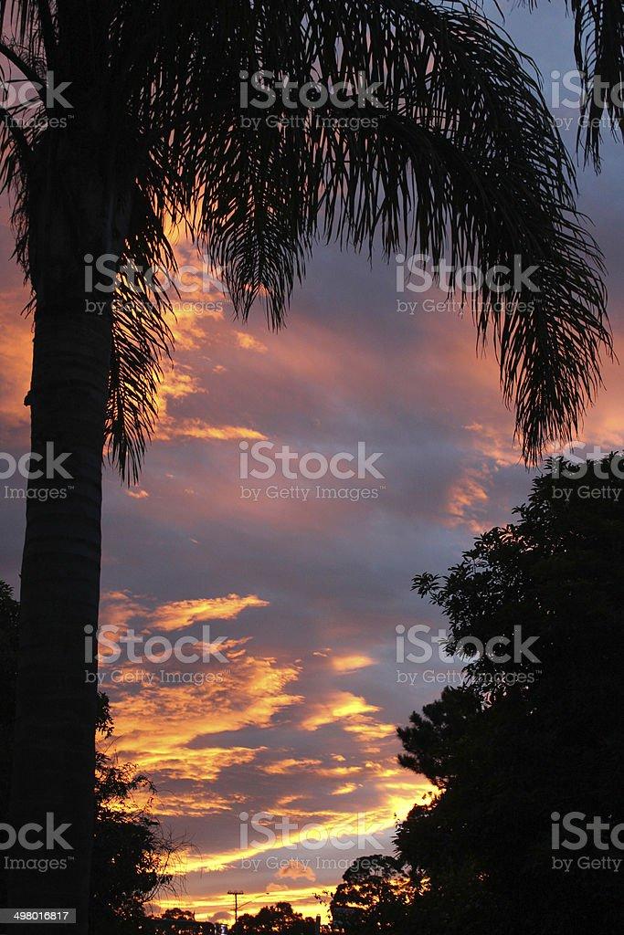 Puesta de sol con una palm tree silhouette foto de stock libre de derechos