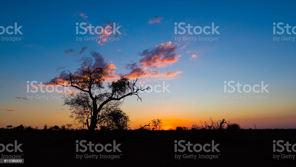 Sunset with Acacia tree silhouette in the african bush stock photo