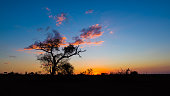 Sunset with Acacia tree silhouette in the african bush