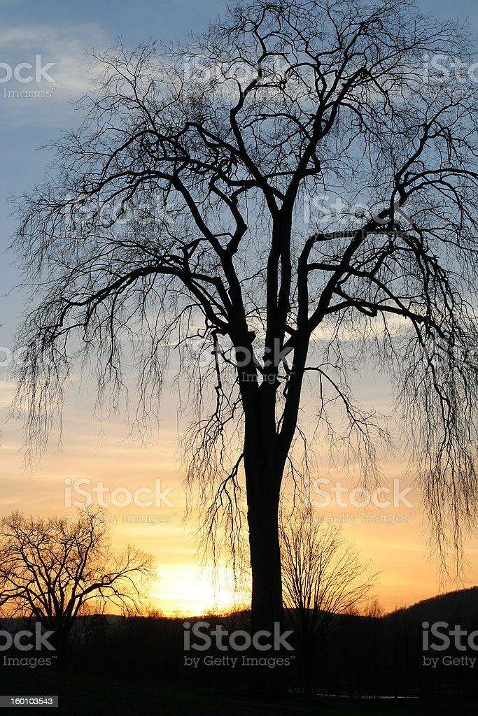 Sunset with American Elm royalty-free stock photo