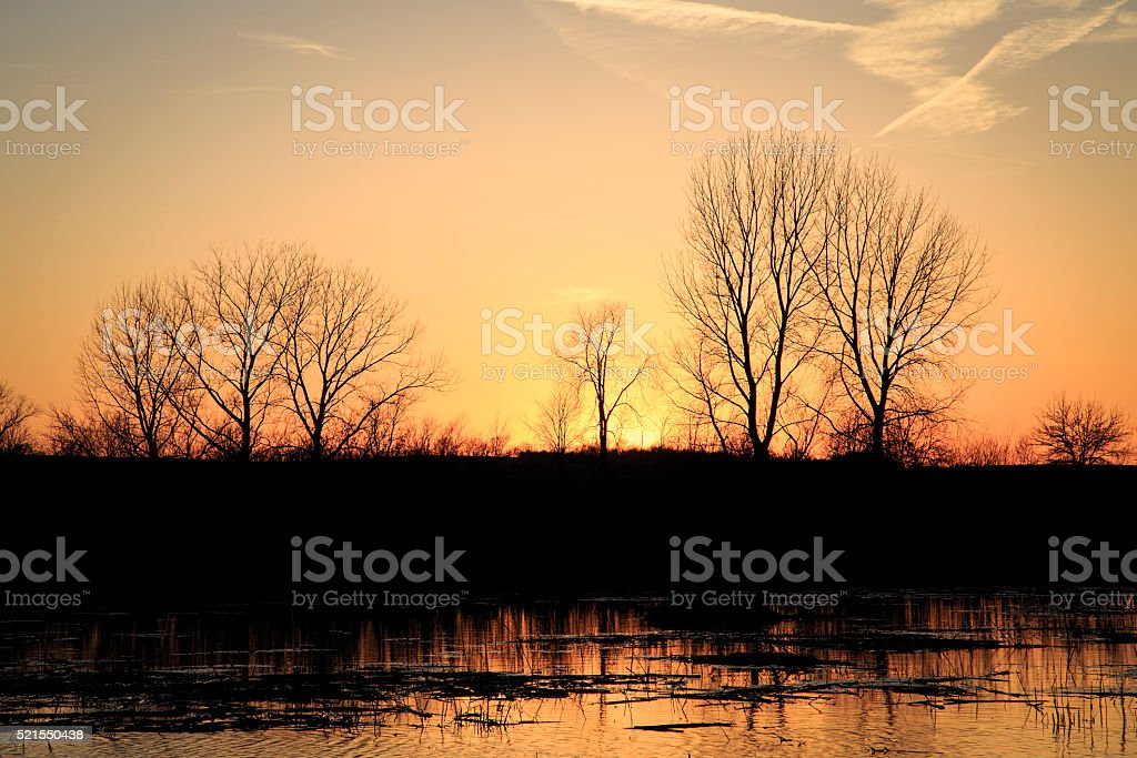 Sunset with Bare Trees and Wetland stock photo