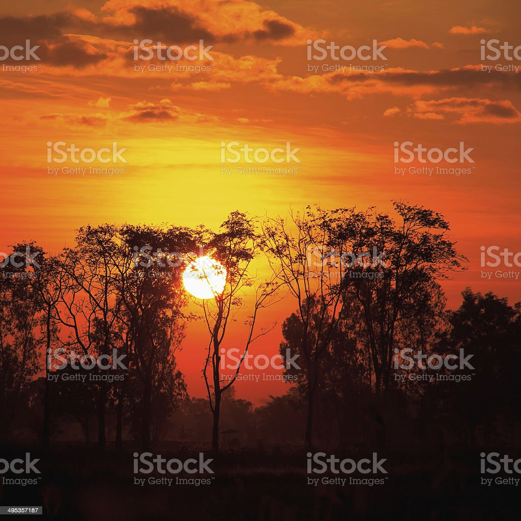 Sunset with dead trees at Thailand stock photo