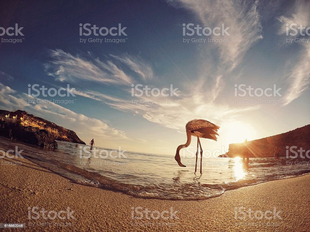 Sunset with flamingo in Sicily stock photo