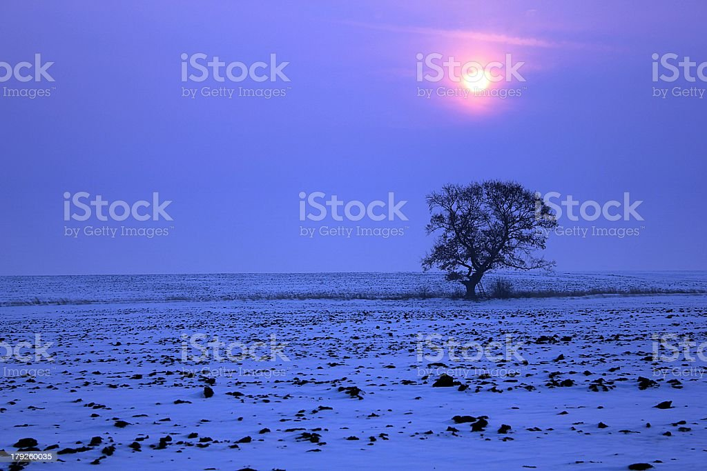 Sunset with lonely tree in snowy field - winter background royalty-free stock photo