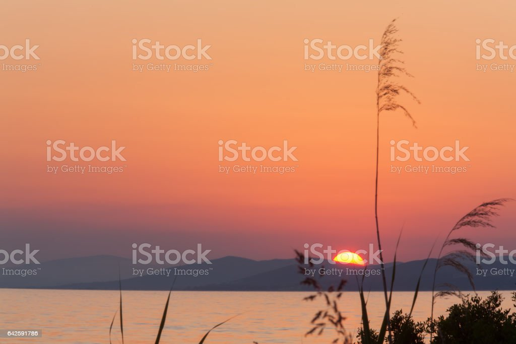 Sunset with Meadow Grass, Chalkidiki stock photo