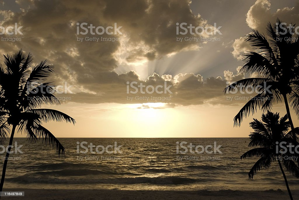 Sunset with Palms royalty-free stock photo