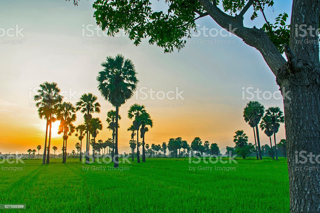 Sunset with Plamyra Grove royalty-free stock photo
