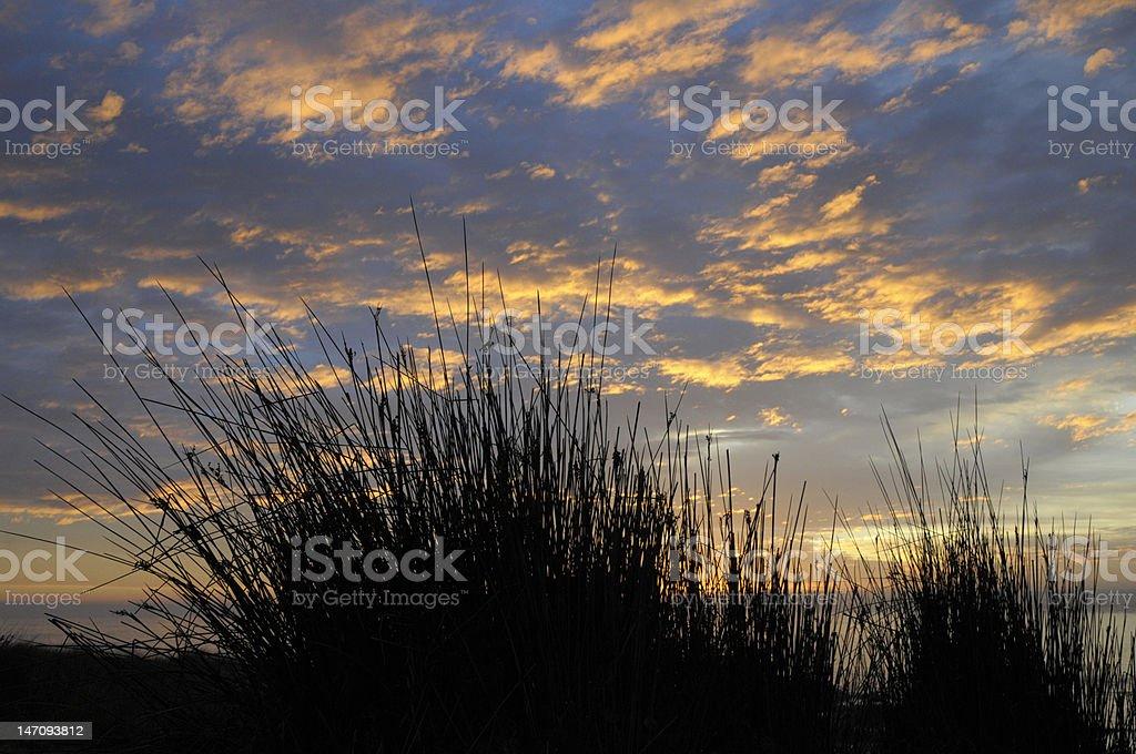 Coucher de soleil avec reed silhouette photo libre de droits