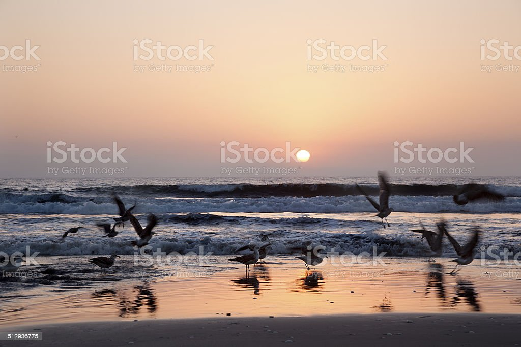 Sunset with seagull stock photo
