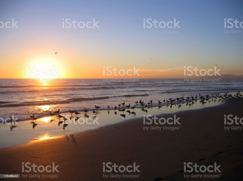 Sunset with Seagulls on beach of Costa da Caparica (Portugal) royalty-free stock photo