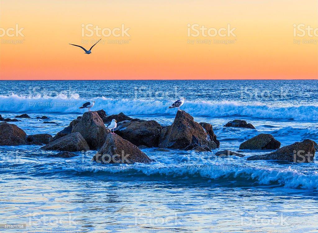 Sunset with seagulls (P) stock photo