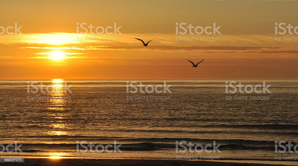 Sunset with sea-gulls stock photo