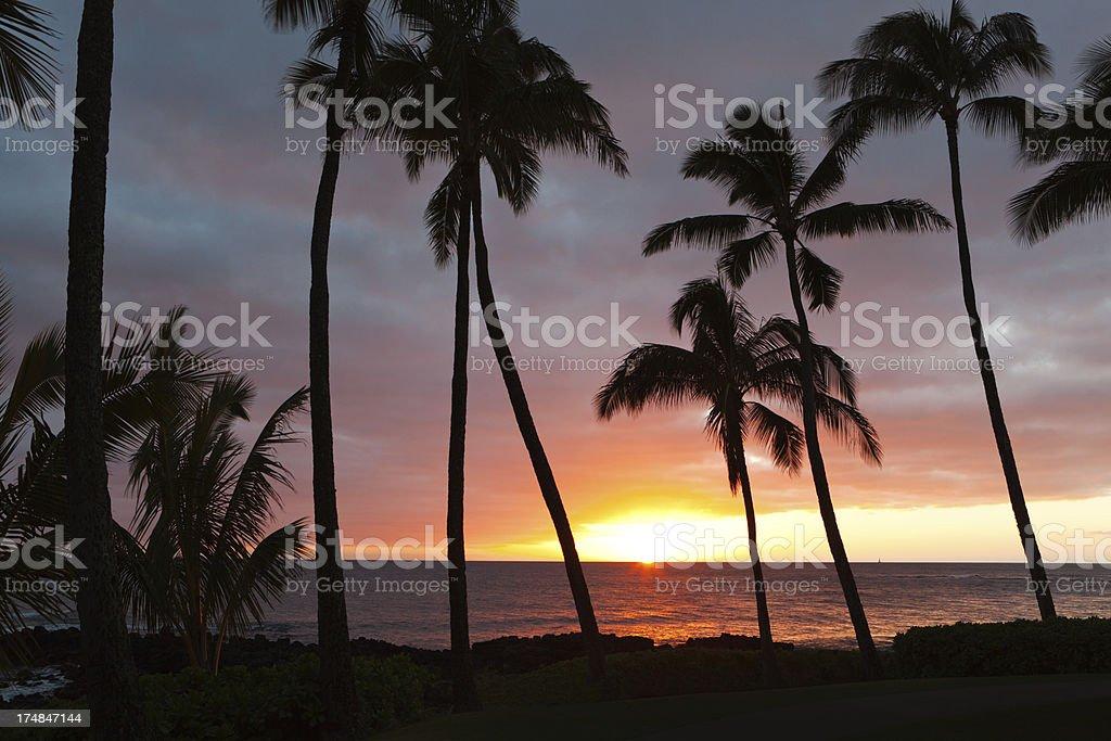 Sunset with Silhouette Palm Trees in Poipu Kauai Hawaii royalty-free stock photo