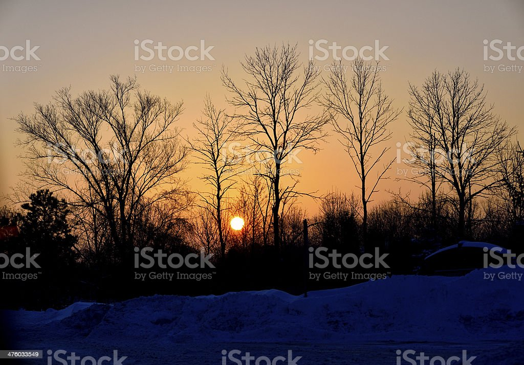 Sunset with trees in winter stock photo