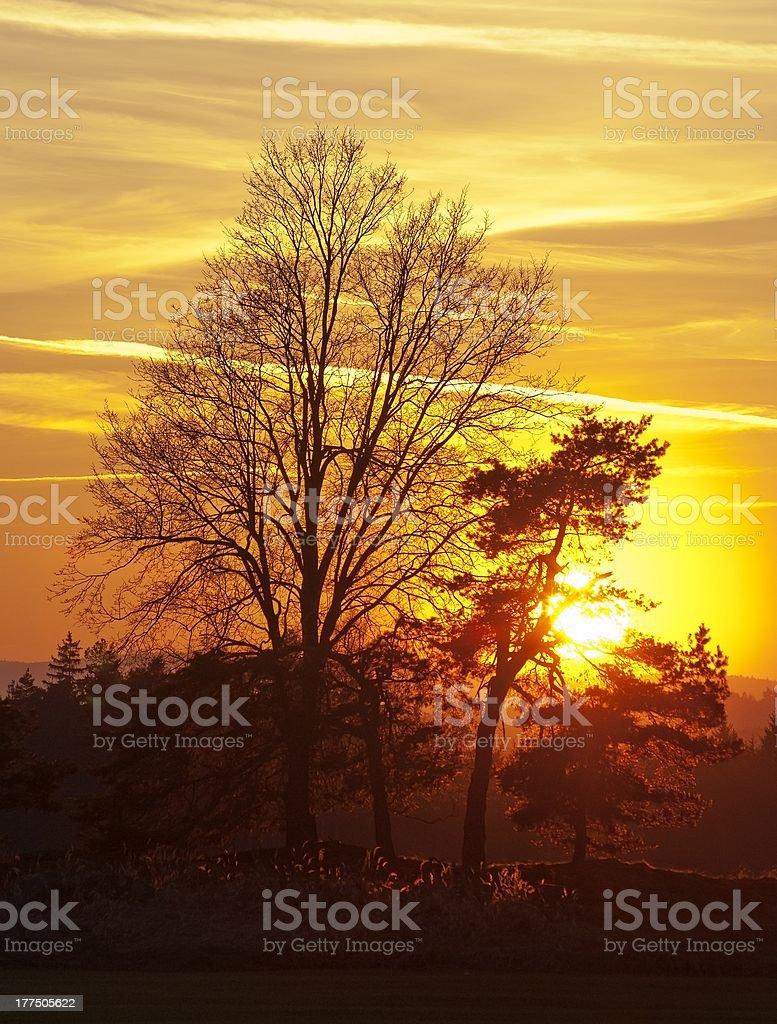 Avec des arbres au coucher du soleil photo libre de droits