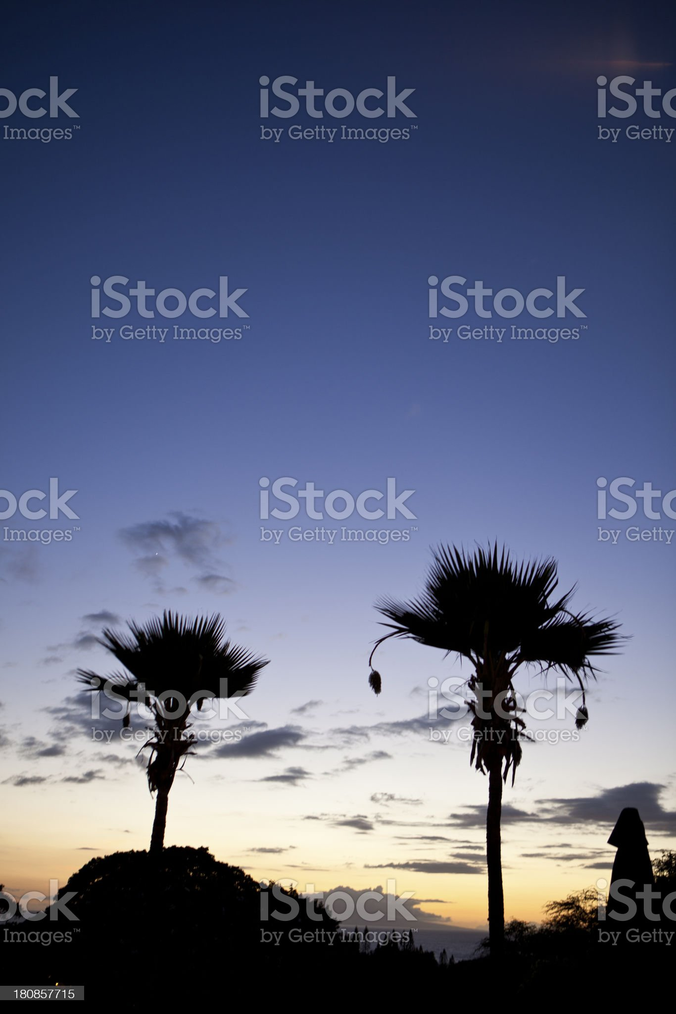 Sunset with Two Palm Trees royalty-free stock photo