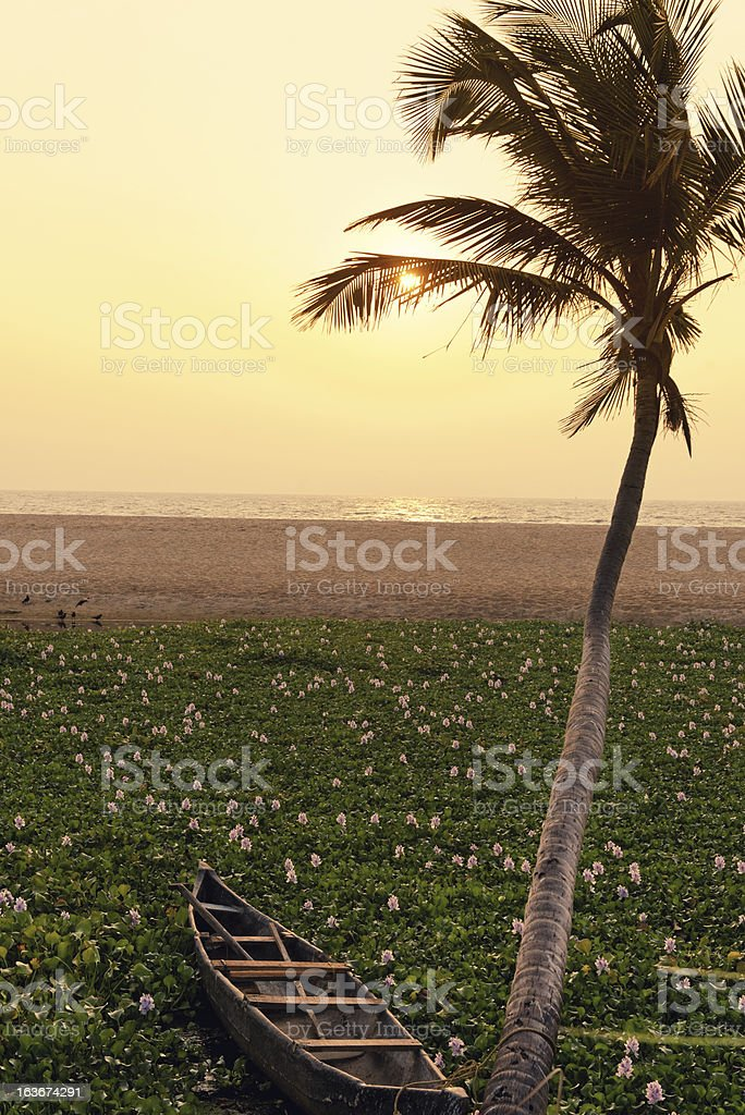 Sunset with water hyacinths,palm tree ,dinghy,Kerala,India stock photo