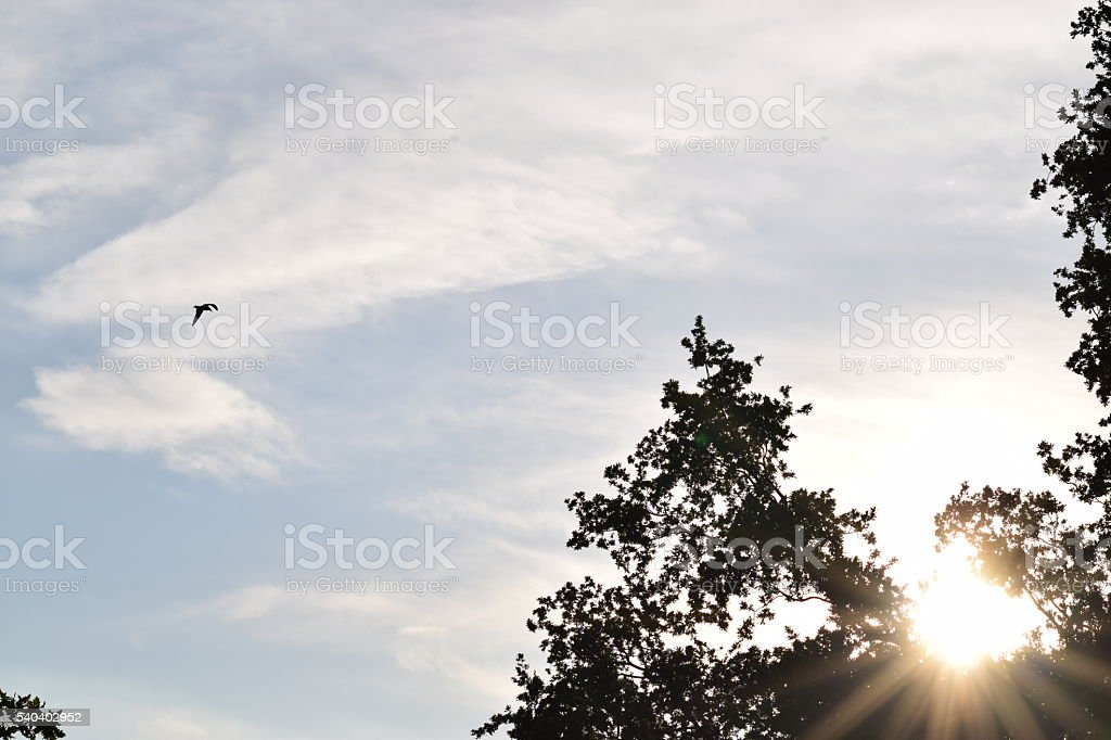 sunsetting gull bird silhouette sky background summer stock photo