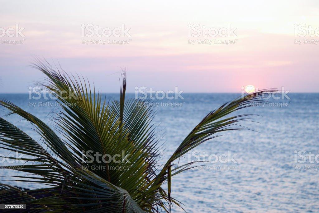 Sunsetting Palm stock photo