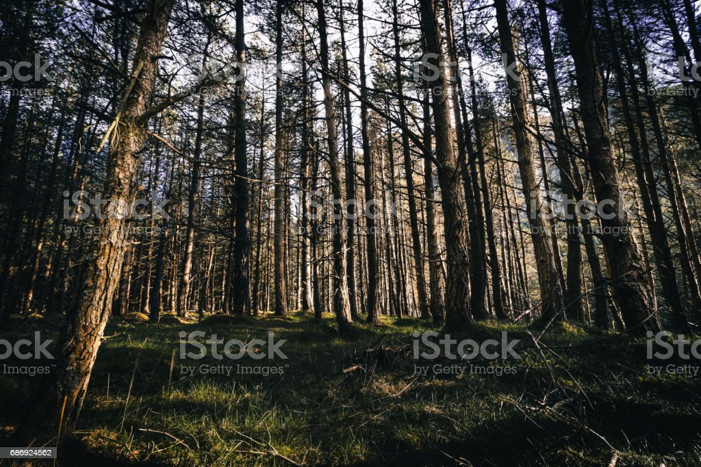 Sunsetting through the trees stock photo