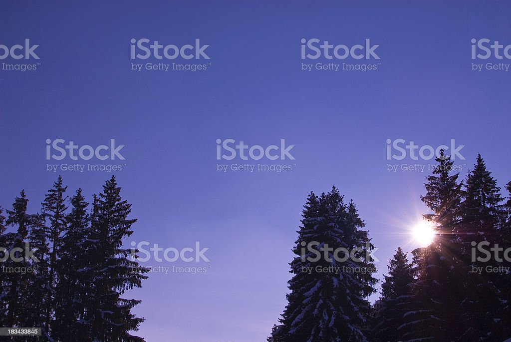 Sunshine behind the dark trees stock photo