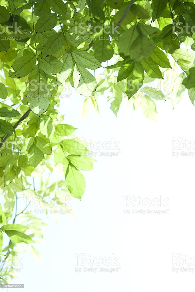 sunshine cross the green leaves royalty-free stock photo