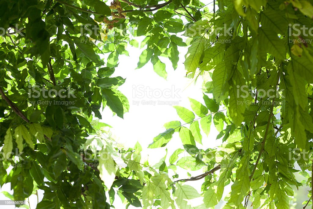 sunshine cross the green leaves royalty-free stock photo