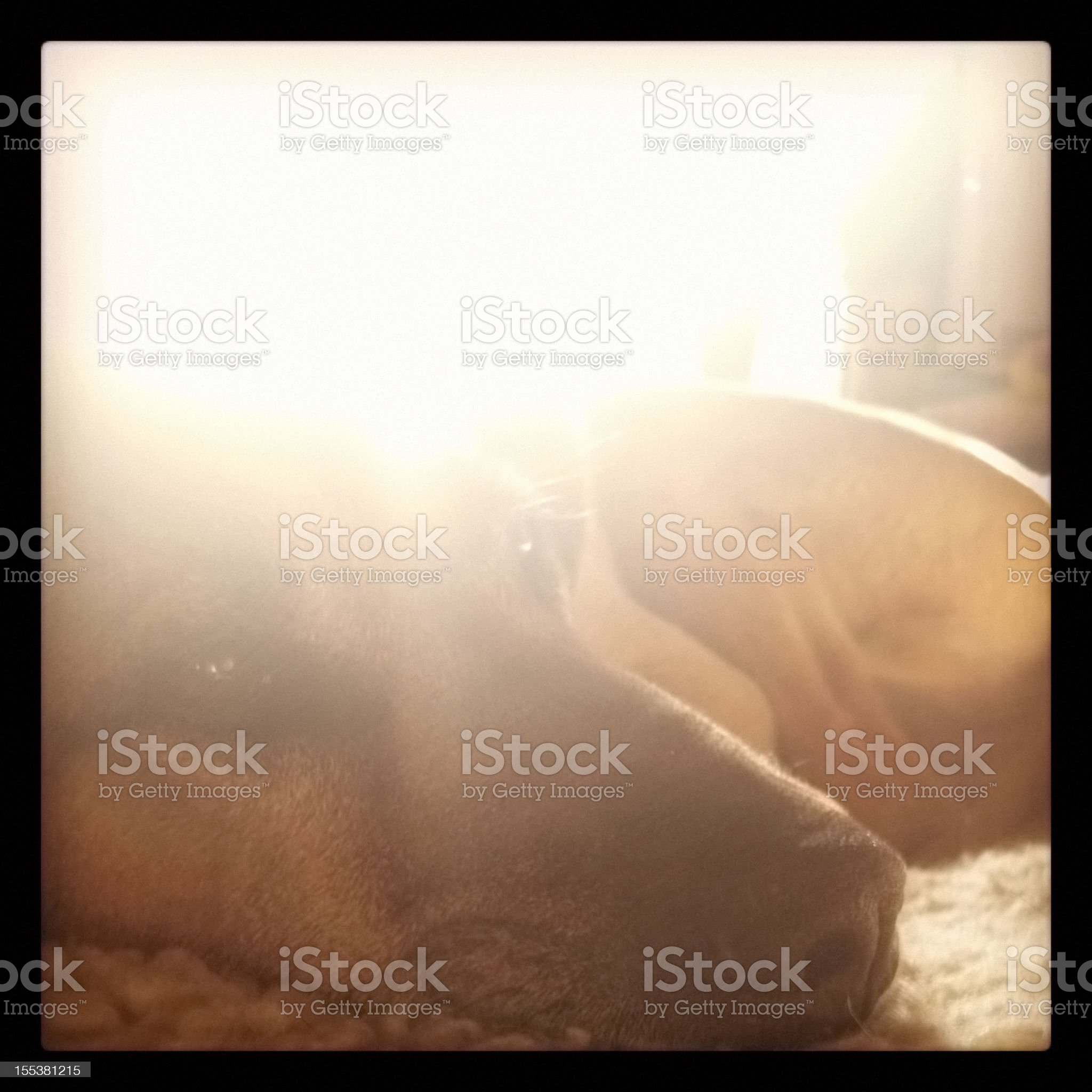 sunshine dog royalty-free stock photo