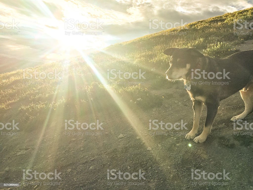 sunshine dog stock photo