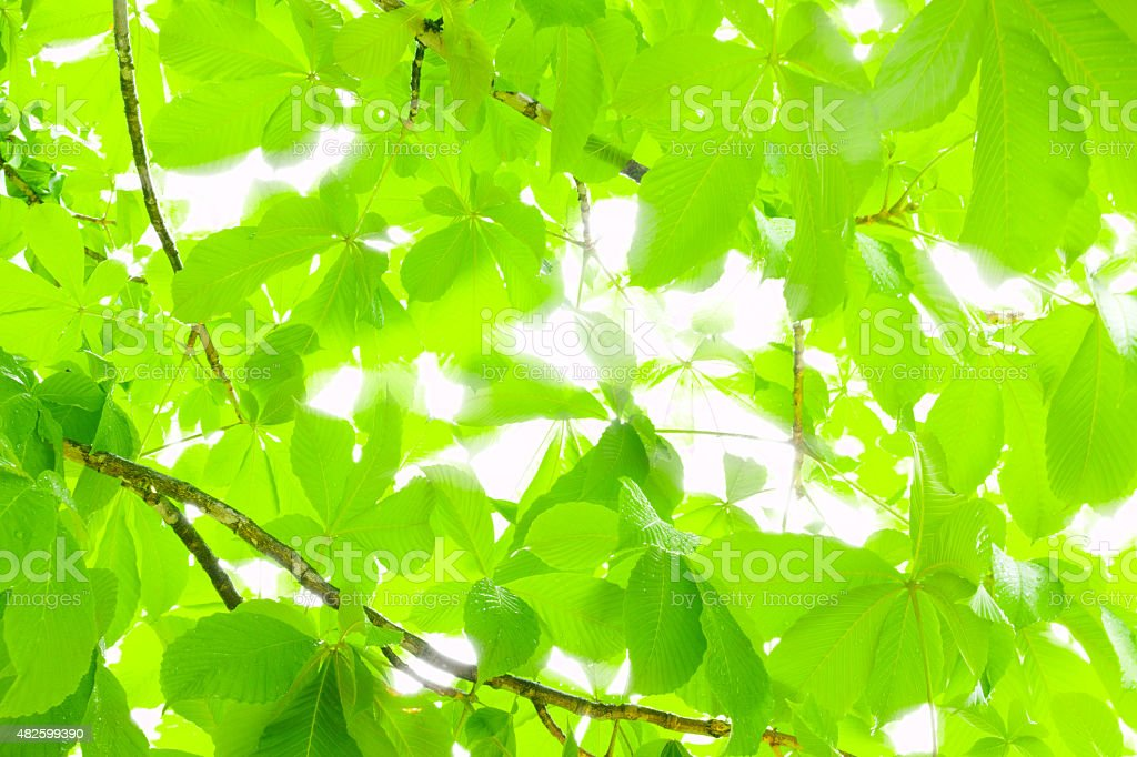 Sunshine filtering through foliage stock photo