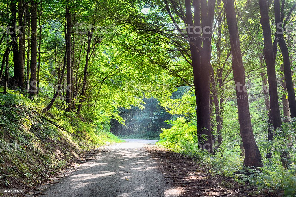Sunshine in forest stock photo