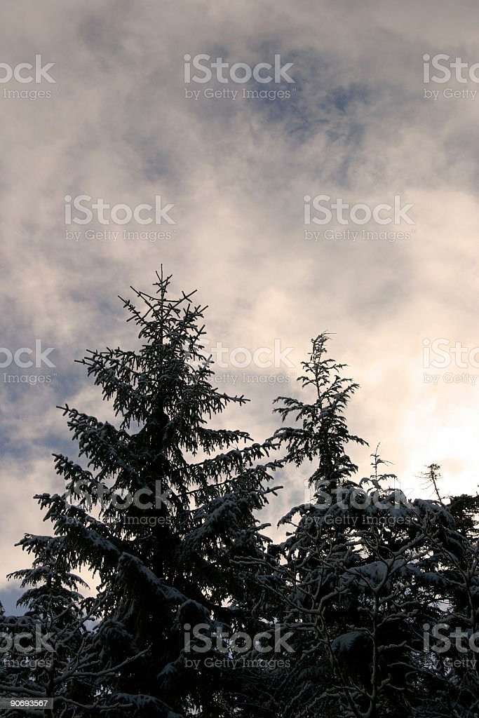 Sunshine in the Winter royalty-free stock photo