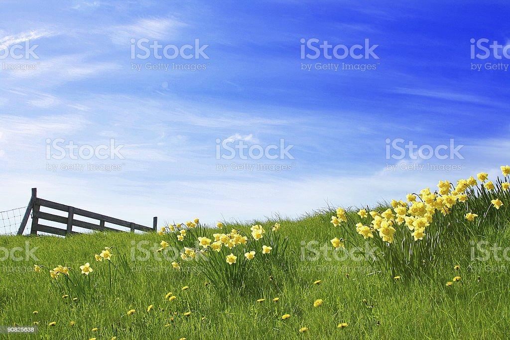 Sunshine Landscape royalty-free stock photo