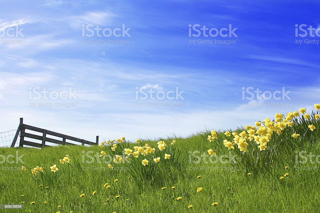 Sunshine Landscape stock photo
