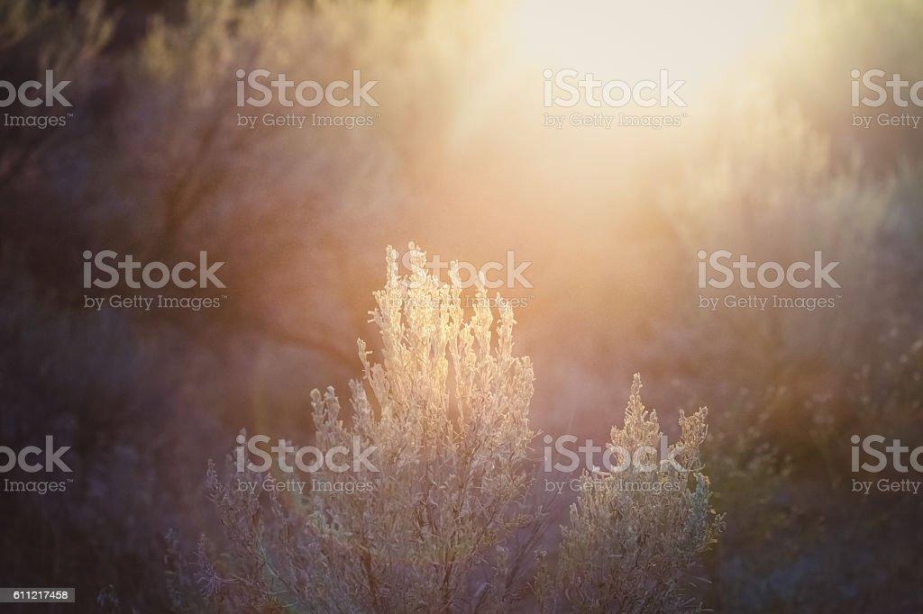 Sunshine On Sagebrush stock photo