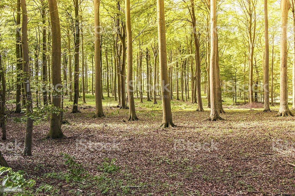 Sunshine on woodland floor in summer royalty-free stock photo
