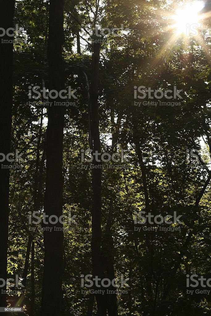 Sunshine peeking through the forest royalty-free stock photo
