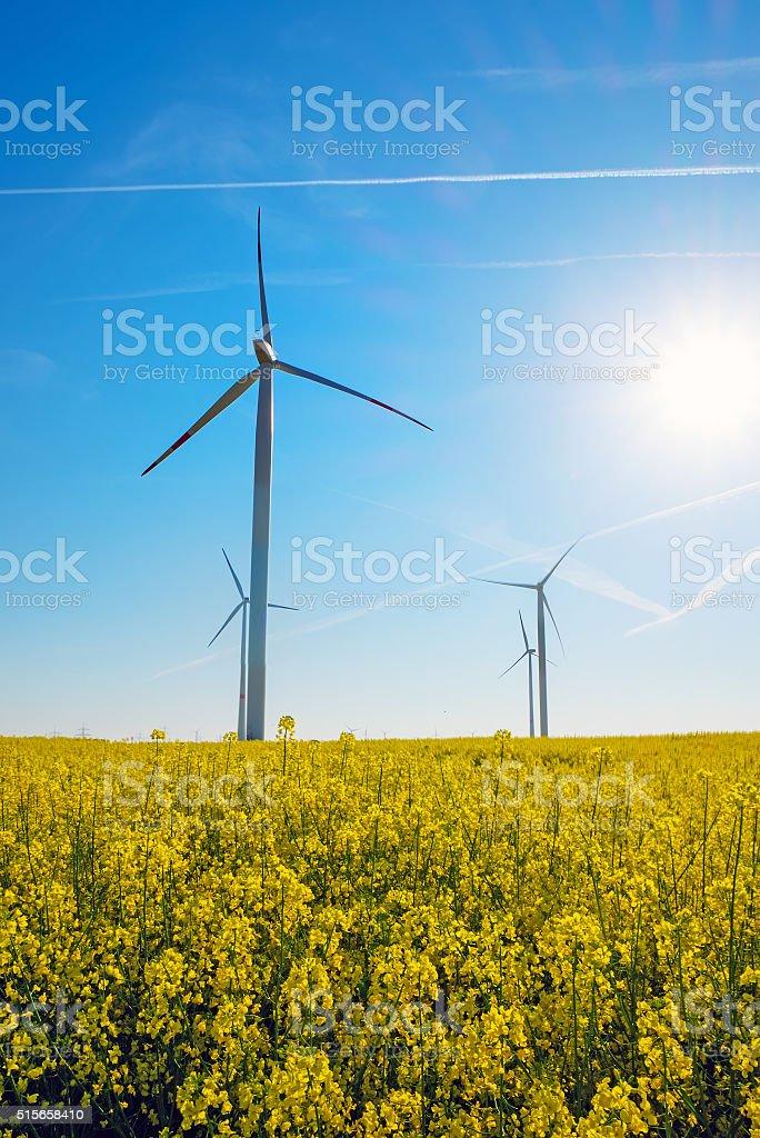 Sunshine, rapeseed and windwheels stock photo