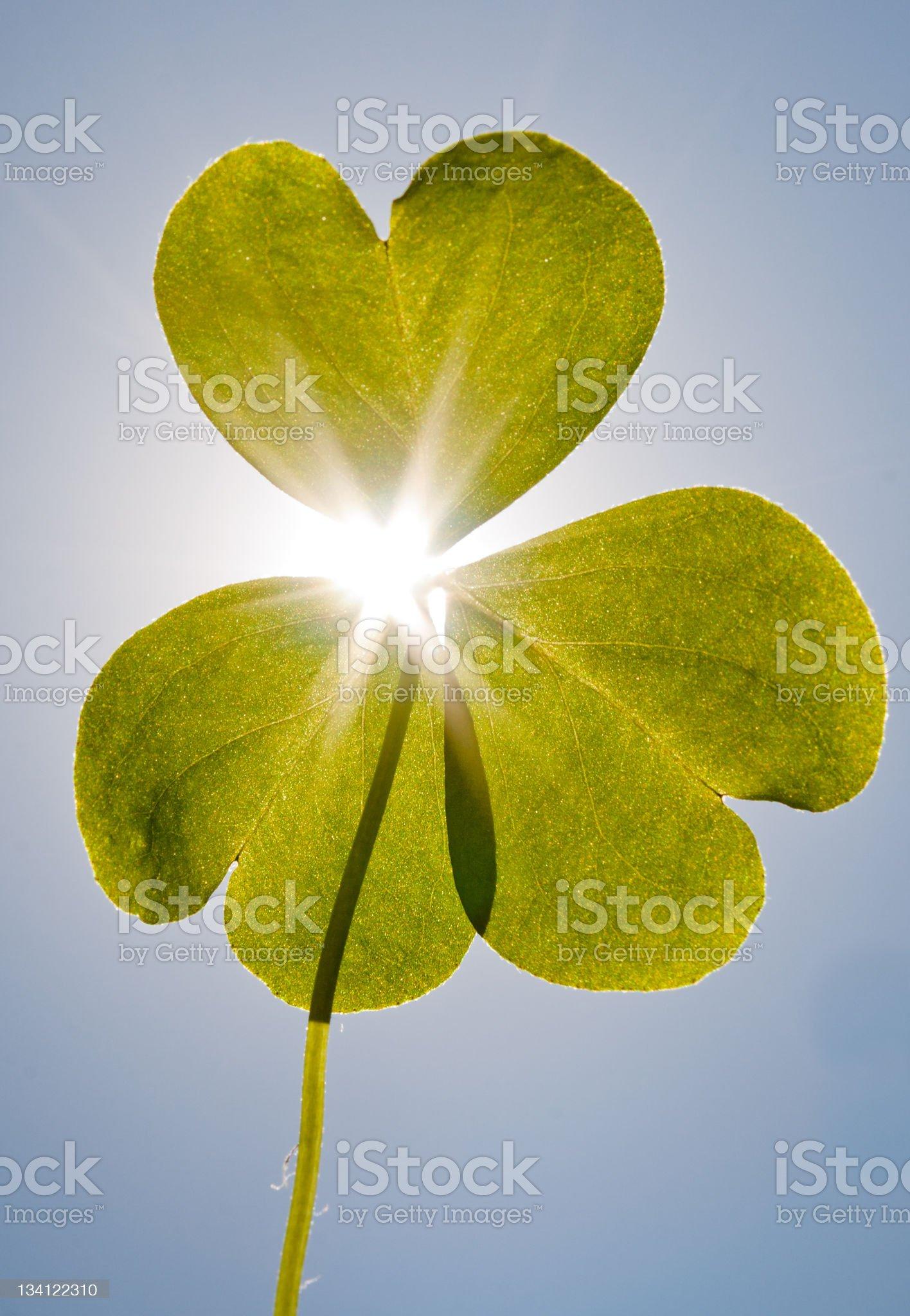sunshine through a clover royalty-free stock photo