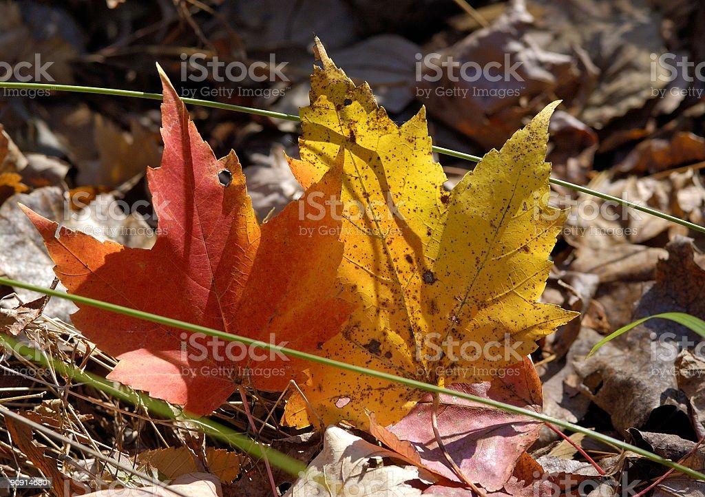 sunshine through autumn leaves royalty-free stock photo