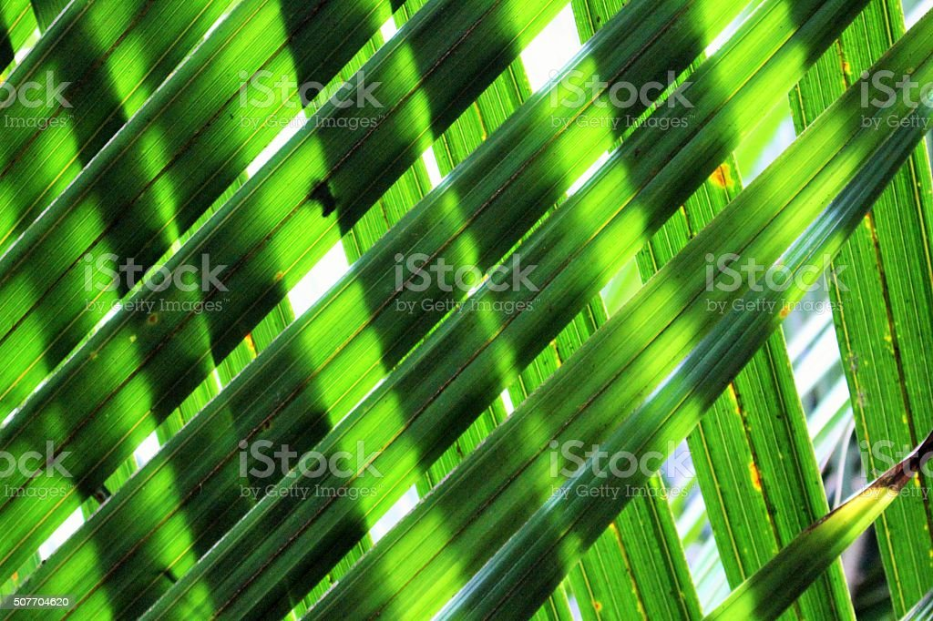 Sunshine through overlapping palm fronds stock photo