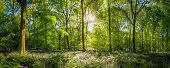 Sunshine warming idyllic woodland glade green forest ferns wildflowers panorama