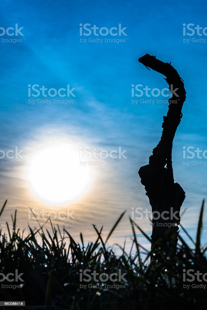 Sunsrise over Treestump stock photo