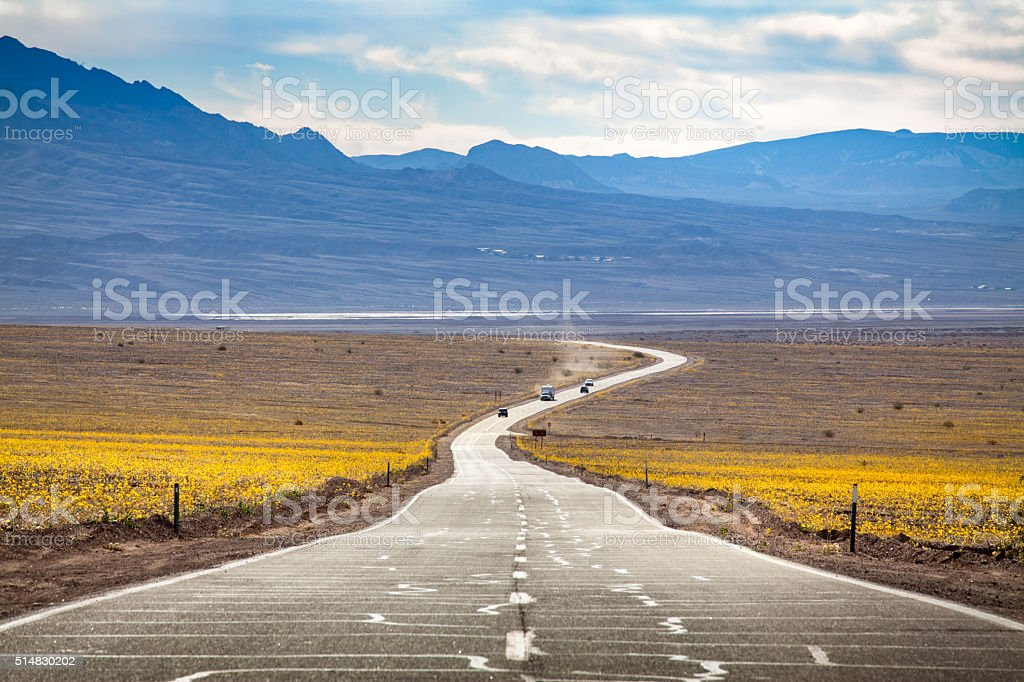 Super Bloom Of Desert Gold Wildflowers, Highway 190, Death Valley royalty-free stock photo