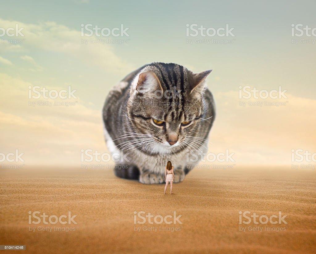 Super Cat stock photo